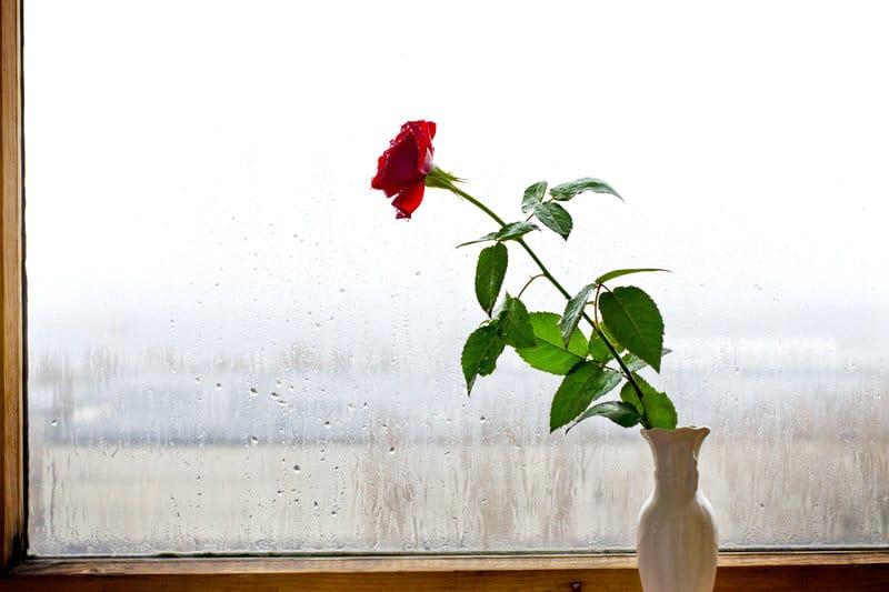 vochtig raam